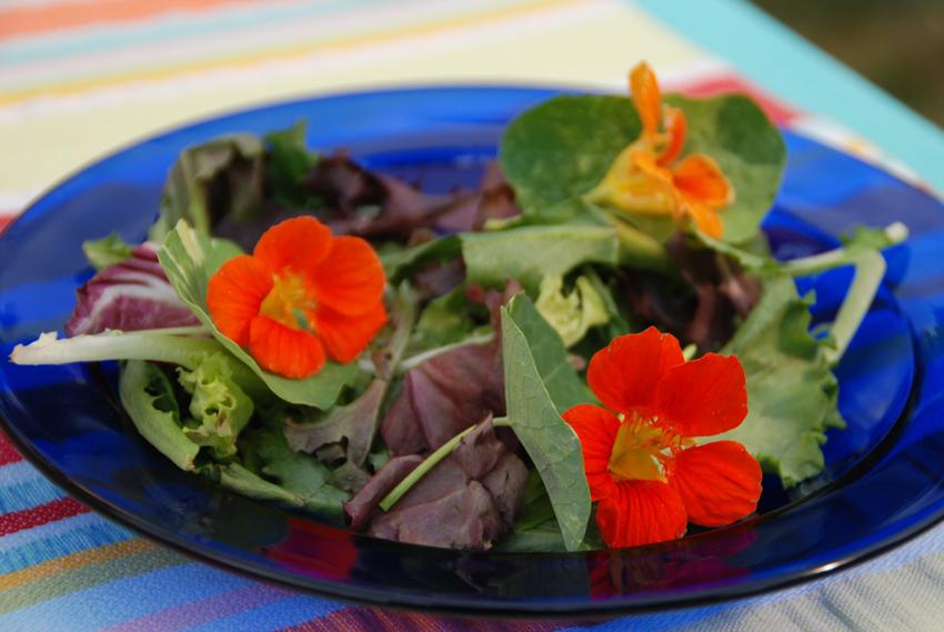 Nasturtium in saladWEB